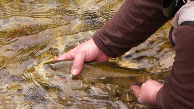 Nouvelle règlementation pêche en Lozère 2018